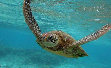 """علماء يكشفون """"حقائق مذهلة"""" عن السلاحف البحرية"""