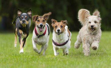هل تحلم الكلاب كباقي الثدييات أم لا؟