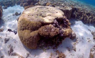 تزايد التيارات الساخنة يهدد الشعاب المرجانية